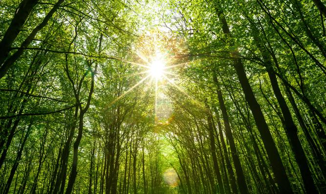 Joy is sunlight for the soul - www.BreslovTorah.com