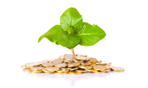 Gold coins and plant on white background