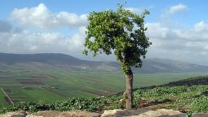 Shelach – The Beauty of Eretz Yisrael (Video Clip)