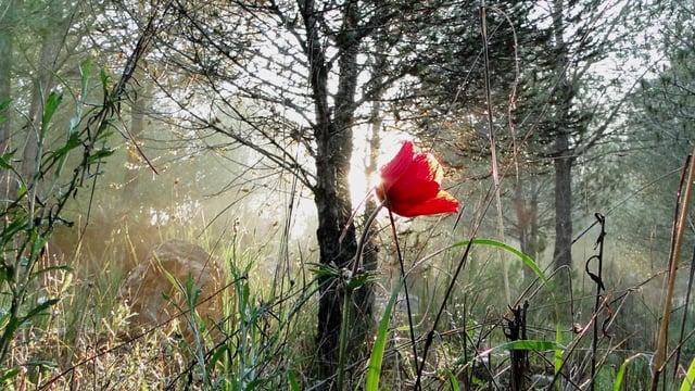 5-Minute Meditation – Tishrei – Nachalat Ephraim