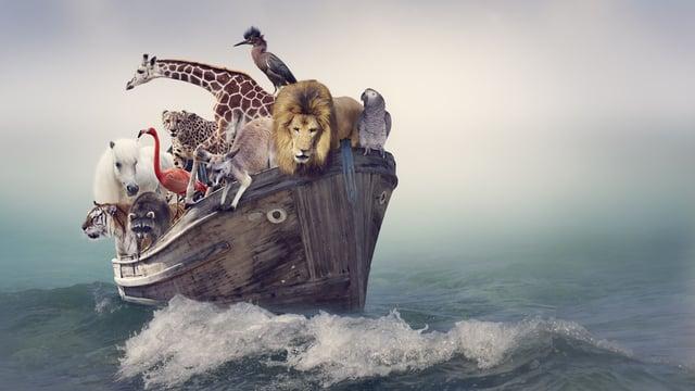 Parsha 02 – Noah's Ark – Blueprint for Survival