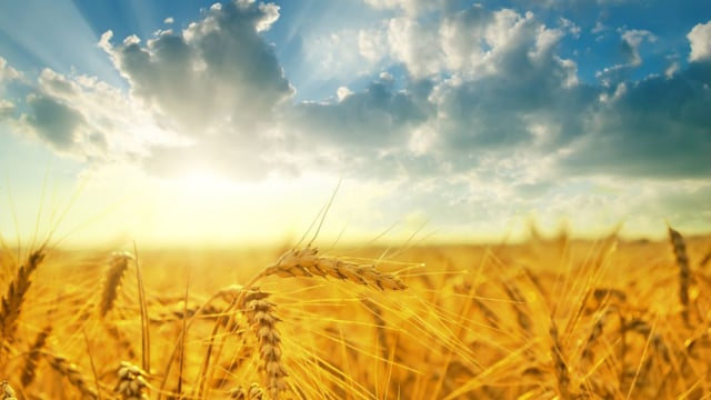 Shavuos – Naomi and Ruth (Video)