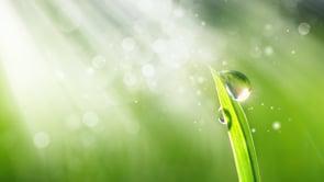 How the Tzaddik Heals a Soul – Likutey Moharan 146